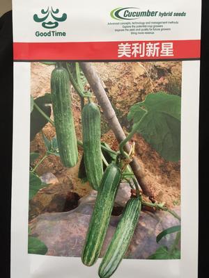 这是一张关于谷雨黄瓜 早熟高产节节有瓜瓜长品质佳绿白的产品图片