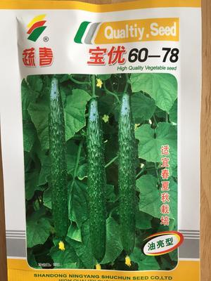 浙江省温州市文成县油亮密刺黄瓜种子 宝优高产特级不溜肩抗病强丰产