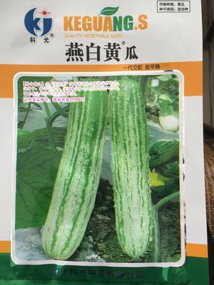 这是一张关于燕白黄瓜种子 极早熟高产长势强抗病绿白色丰产的产品图片