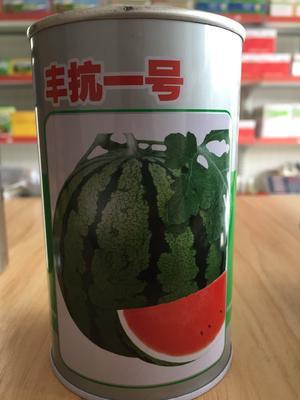 浙江省温州市文成县丰抗一号 大品牌圆形红瓤超甜超大中熟品种