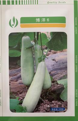 山东省聊城市莘县博洋6号甜瓜种子 杂交种 ≥85%