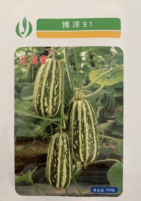 山东省聊城市莘县博洋91甜瓜羊角脆种 杂交种 ≥85%