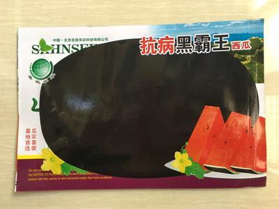 江苏省宿迁市沭阳县黑神98无籽西瓜种子 二倍体杂交种 ≥85%