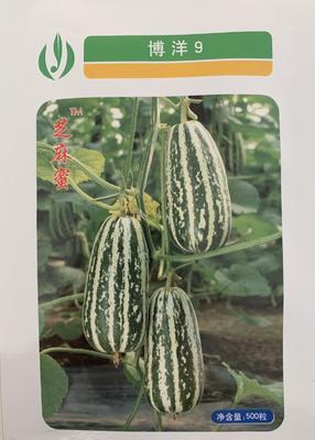 山东省聊城市莘县博洋9号甜瓜种子 杂交种 ≥85%