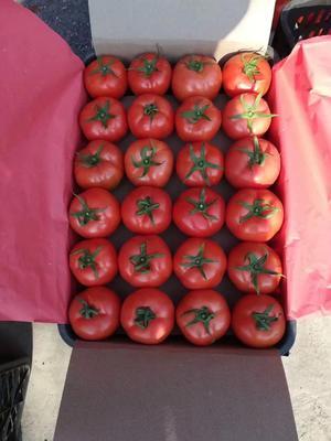 四川省攀枝花市米易县大红硬果 弧三以上 大红 通货