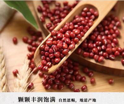 河北省廊坊市文安县赤小豆