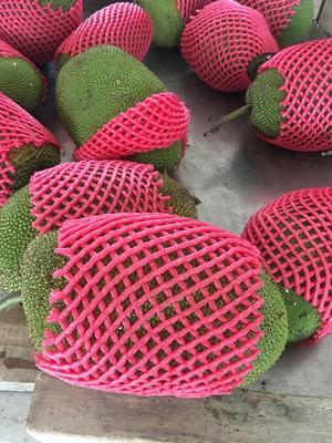 这是一张关于榴莲蜜 的产品图片