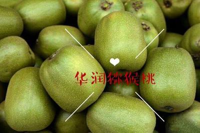 四川省乐山市市中区红心猕猴桃 50克以上