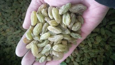 新疆维吾尔自治区吐鲁番地区吐鲁番市新疆绿葡萄干 一等