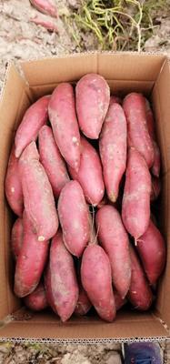 这是一张关于沙地红薯 红皮 的产品图片
