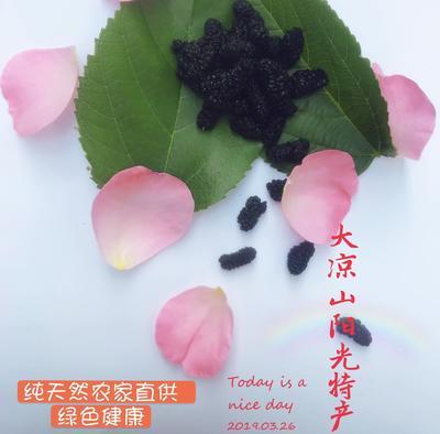 四川省凉山彝族自治州德昌县德昌桑葚 2 - 3cm 桑葚干糖分高纯天然