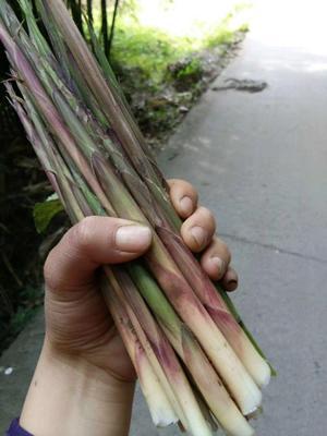 这是一张关于水竹笋 鲜笋 的产品图片