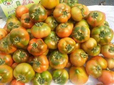 山东省青岛市城阳区72-69西红柿 精品 弧三以上 青色