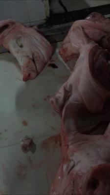 这是一张关于鲜猪头 的产品图片