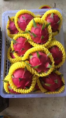 这是一张关于桂红龙一号火龙果苗 的产品图片