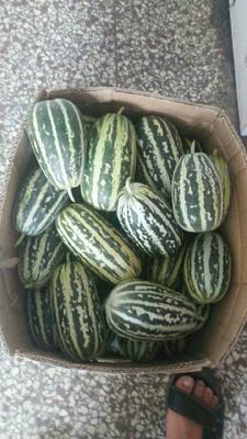 这是一张关于博洋9号甜瓜 1斤以上 的产品图片