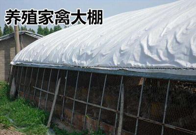 黑白膜 Pep国产养大棚殖蔬菜大棚