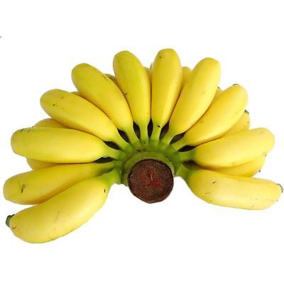 小米蕉粉蕉约9斤非红香蕉牛奶凤梨产地直发