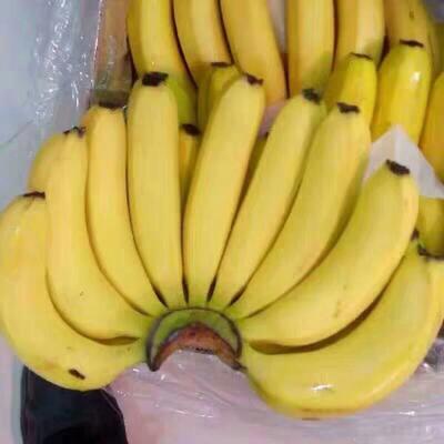 包邮高山甜香蕉一件代发平台微商自有基地