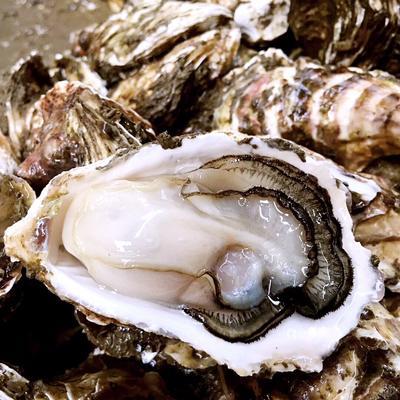 野生生蚝 生蚝原产地批发、可全壳、可开半壳