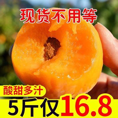 大红杏 40-45mm