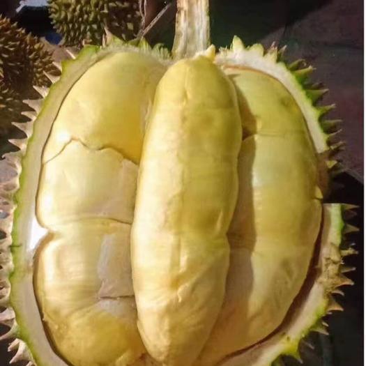 榴莲越南泰国金枕头猫山王榴莲全国一件代发,包邮包售后