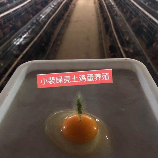绿壳鸡蛋 开窝小绿!超低价!420个一箱净重 30斤