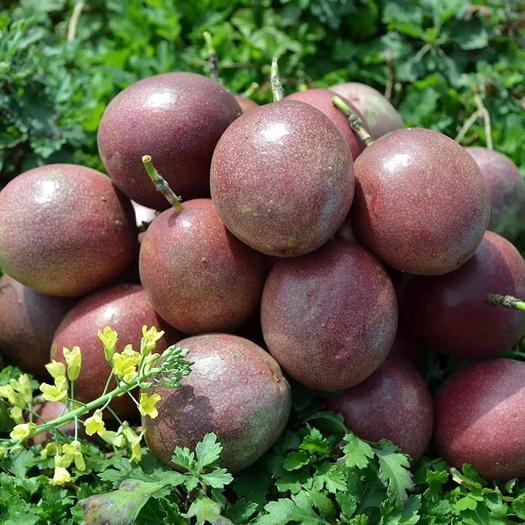 送开果器 百香果5斤大果30-40个 一件代发
