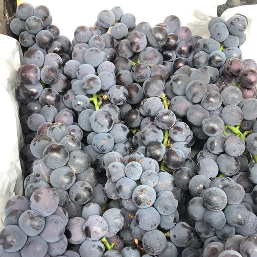 巨峰葡萄 2斤以上 5%以下 1次果