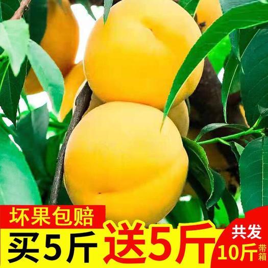 黄桃新鲜黄桃水果武台黄桃时令桃子纯甜新鲜10斤装 特价包邮