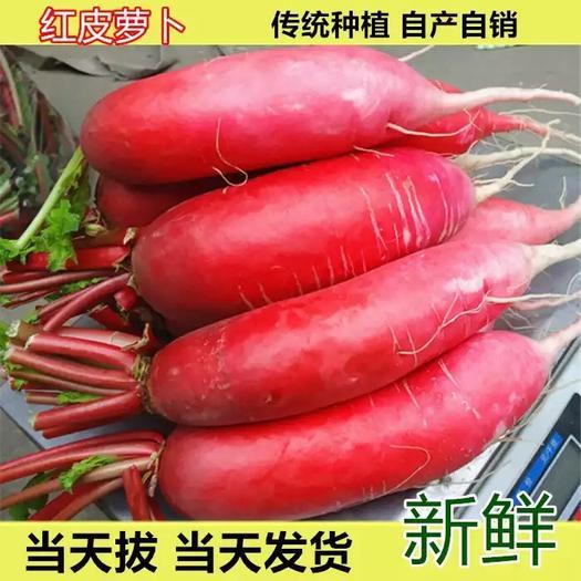 【现挖现发】红皮萝卜水果萝卜新鲜蔬菜泡菜萝卜10斤装 包邮