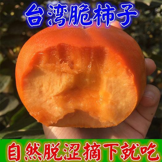 火晶柿子苗 台湾脆柿品种齐全柿子树苗南北方种植