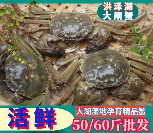 大闸蟹 螃蟹 洪泽湖大闸蟹 精品蟹 六月黄 塘口直发