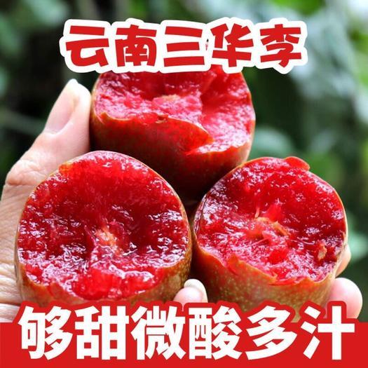 福建红心三华李芙蓉李现摘新鲜水果5粒内不售后第六颗0.3