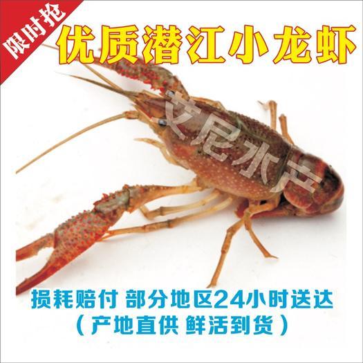 潜江小龙虾 💥💥最强人气王💥💥本店看质量比价格💥💥💥