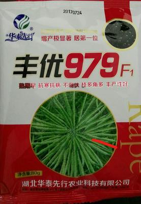 湖南常德油菜籽种子 种子 80克丰优979F1油菜种子