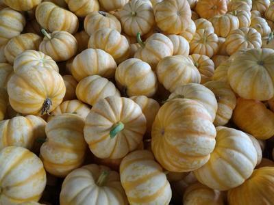 山东省潍坊市寿光市日本桔色南瓜 0.5~0.7斤 扁圆形