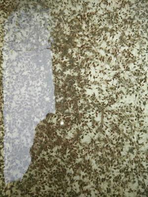这是一张关于黑斑蛙 青蛙的产品图片
