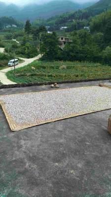 湖南郴州玉米粒 净货 水份14%-16% 霉变≤1%