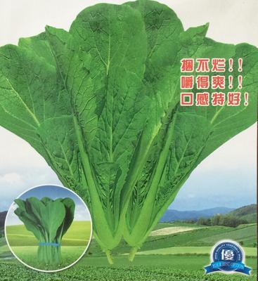 北京海淀区青梗菜种子