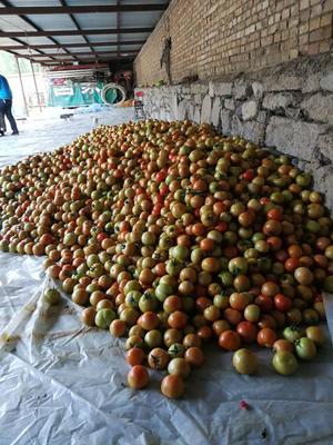 这是一张关于大红硬果 大红 通货 不打冷的产品图片