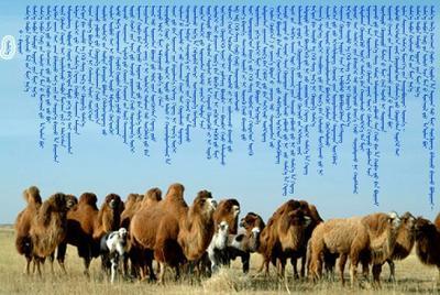 内蒙古自治区阿拉善盟阿拉善左旗骆驼奶 1个月 冷藏存放