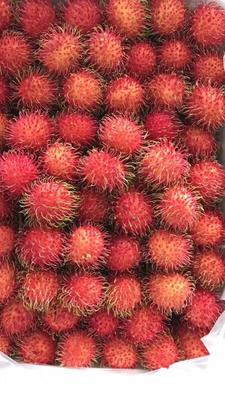 广西崇左三月红荔枝 2cm