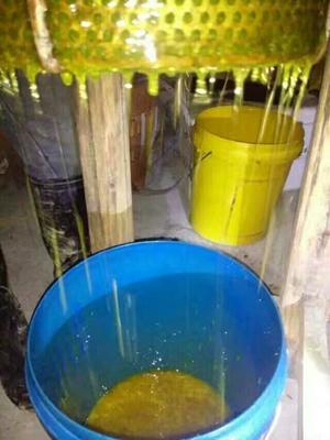 湖南湘西土蜂蜜 玻璃瓶装 2年以上 100%