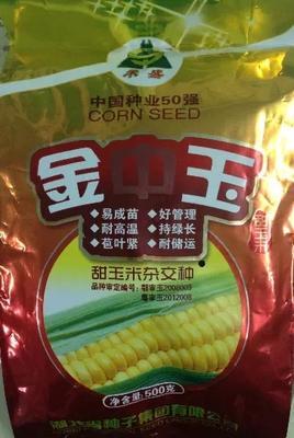 湖北孝感玉米种子 种子