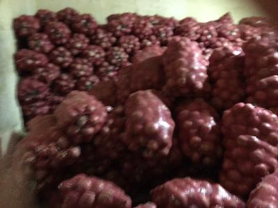 河南商丘红皮洋葱 4两以上 6~8cm 红皮