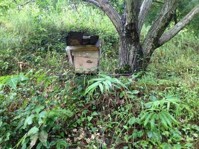 这是一张关于野生蜂蜜 100% 2年以上 塑料瓶装的产品图片
