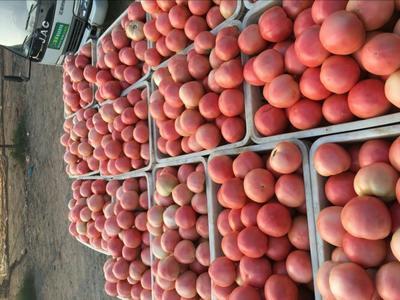 这是一张关于硬粉番茄 硬粉 通货 打冷的产品图片