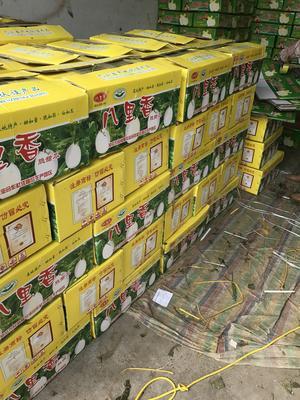 河南省安阳市滑县天蜜脆梨甜瓜 1.5斤以上