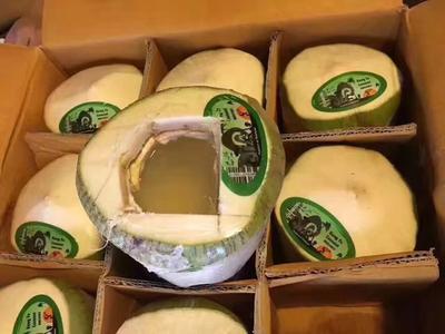广东广州椰青 1 - 1.5斤